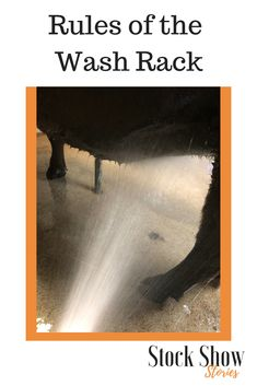 Have you ever had someone you don't know drench you while you are on the wash rack? It happens all of the time. Use these tips to know how to wash cattle, withoug being one of those people. Cattle Barn, Show Cattle, Beef Cattle, Rare Animals, Strange Animals, Show Steers, Show Goats, Cowboy Ranch, Mini Cows