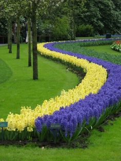 Amazing Flower line on the Garden.   See More Pictures