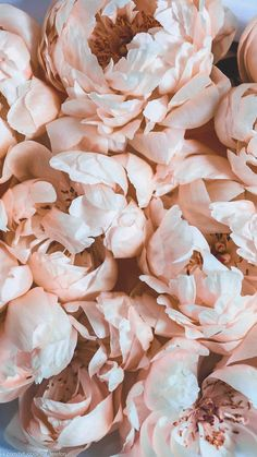 # phone number # offend the phone Flower Phone Wallpaper, Screen Wallpaper, Cool Wallpaper, Pink Wallpaper, Peach Aesthetic, Flower Aesthetic, Aesthetic Iphone Wallpaper, Aesthetic Wallpapers, Phone Backgrounds