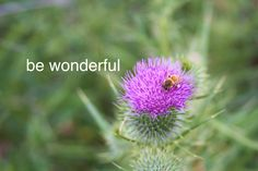 Bee Wonderful: by YES Psychology & Consulting. photo taken by Kash Thomson. www.yespsychology.com.au