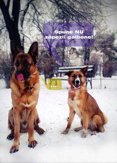 Concurs Synevovet - animale de companie