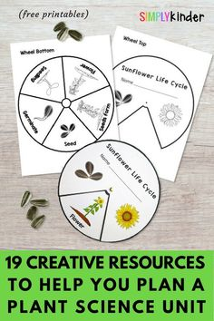 Kids love planting and getting their hands dirty, so plant science units are always fun to teach. Here are some of the best plant activities, books, printables, and videos to make this topic fun and your planning easier. These are perfect for preschool, kindergarten, and first grade students