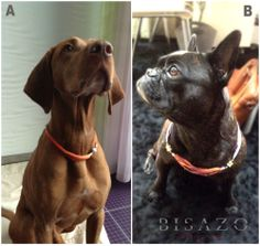 Who wore it better? A or B? You decide! #dogs #cutepets
