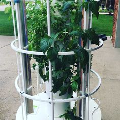 Cleaning and replanting my #garden today  I love how easy this is and it stays in my garage!!  #growyourownfood #growyourowngreens #freshfood #livingfood #sofresh #rdhouse #easygarden #freshherbs #freshgreens #kaleyeah #indoorgarden #aeroponic