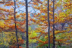 trees,leaves,red,yellow,orange, floral, plants, colorful, horizontal, outdoors, nature, landscape, exterior, europe, photography, fine art, national park, mountain, landscapes,tree,forest,sunset,sunrise,woods,