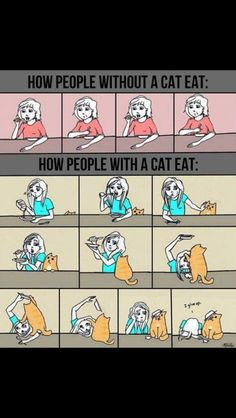Life with cat's
