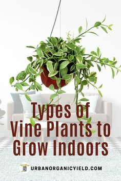 Learn more about vining plants.  We have complied a list of the best vining plants that you can have as houseplants.  They are also easy to grow indoors.   #Houseplants #IndoorGardening #ViningPlants #Gardening #UrbanOrganicYield Covent Garden, Outdoor Plants, Outdoor Gardens, Indoor Gardening, Outdoor Spaces, Brick Patterns Patio, Growing Plants Indoors, Olive Garden, Climbing Vines