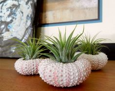 Urchin planters: So You Want To Get Married On The Beach