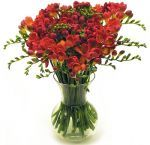 Whole Blossoms offers wholesale Freesia Flowers for weddings, parties and events. Freesia Flowers are popular for vase arrangements. These flowers represent innocence, thoughtfulness, and trust.  For more information visit: http://buyweddingflowersonline.weebly.com/blog/-grace-an-assortment-with-splendid-freesia-flowers