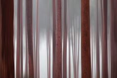 Misty Trees by David Baker