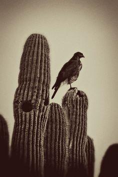 wild west cactus