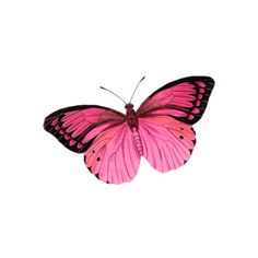 Butterflies Dragonflies ❤ liked on Polyvore