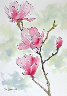Pink Magnolias watercolor wash over pen and ink painting