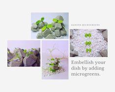 Embellishments, Dishes, Plants, Instagram, Ornaments, Tablewares, Decoration, Plant, Decor