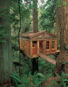 Log cabin or tree house?