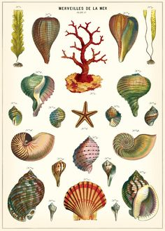 Love these shell vintage style posters