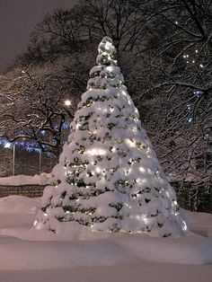 perfect snow covered tree ♥