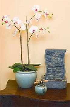 Possibly find a new pot for my orchid to match/contrast paint. Water feature may be  a nice touch.