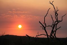 Madikwe Game Reserve, South Africa, 2010