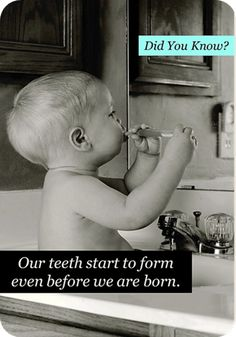 #teeth start to form even before we are born!