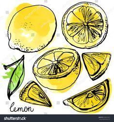 L'art Du Fruit, Fruit Art, Fruit Salad, Fruit Snacks, Fruit Recipes, Line Drawing, Painting & Drawing, Colored Lemons, Lemon Drawing