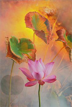 ~~Lotus Flower~~