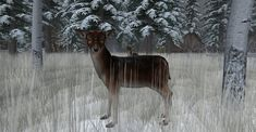 https://flic.kr/p/21Y9AhW | Fallow Deer-016 | The Fallow Deer at Binemust maps.secondlife.com/secondlife/Binemust/132/156/717   Thank you for such beauty, dear Bine Rodenberger!
