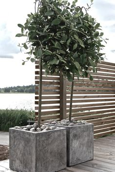 This could work to hide an eyesore. The slatted privacy screen posts could insert into or attach to big heavy planters on either side. No need to insert posts into the ground. Balcony Plants, Outdoor Plants, Balcony Garden, Garden Pots, Outdoor Gardens, Restaurant Exterior, Pot Plante, Design Apartment, Concrete Planters