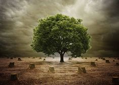 Know how to Control and Stop Deforestation. Find Solutions to Prevent Deforestation, Measures to Protect Wildlife, Steps and Laws for Forest Conservation. Earth Overshoot Day, Rainforest Destruction, Tree Of Life Meaning, Tree Of Life Images, Forest Conservation, World Environment Day, Environment Quotes, Single Tree, Dibujo