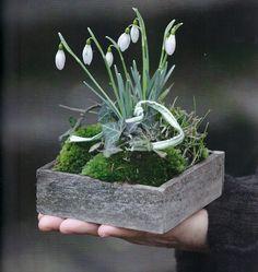 Schneeglöckchen Moos Efeu via La Pouyette. Deco Floral, Arte Floral, Garden Art, Garden Design, Spring Bulbs, Ikebana, Garden Projects, Spring Flowers, Flower Decorations