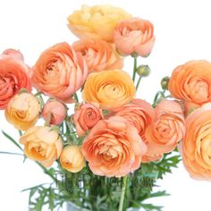 Apricot ranunculus on fiftyflowers.com, GORG.