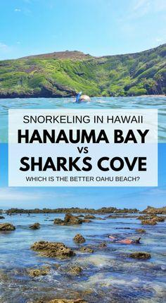Best snorkeling spots on Oahu. Things to do in Oahu Hawaii. Hanauma Bay or Shark's Cove. Snorkel near Waikiki, Honolulu. Hawaii vacation ideas planning tips. Oahu Hawaii, Kauai, Hawaii Travel, Travel Usa, Beach Travel, Travel Tips, Hawaii Beach, Hawaii Life, Budget Travel