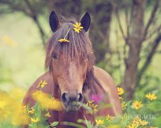 cute little Chincoteague pony in the flowers.