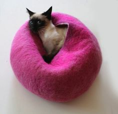 Contemporary Cocoons for the Design-Conscious Cat