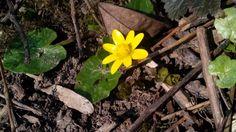 Cute yellow