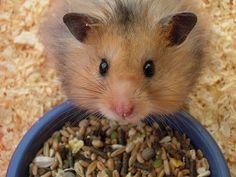 Heehee fuzzy hamster.