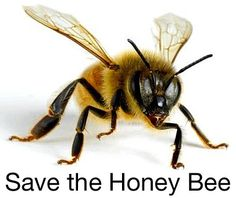 Save our Bees! #No #Poison  Plant good things in your yard NOT GRASS. Plants that feed wildlife with fruit and seeds/nuts. Native plants with pollen and nectar.