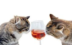 Happy Wine Wednesday!  Head on over to Catwine.co and order your fur baby a…