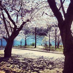 man I miss Highpark! #april #highpark #toronto #nature #lake - @chocho_0908- #webstagram