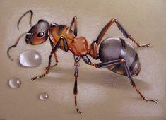 Просмотреть иллюстрацию Муравей из сообщества русскоязычных художников автора Ася Белова в стилях: Графика, нарисованная техниками: Карандаш. Ant Tattoo, Insect Tattoo, Art Drawings Sketches, Animal Drawings, Wood Ants, Cartoon Eyes, Butterfly Drawing, Insect Art, Bugs And Insects