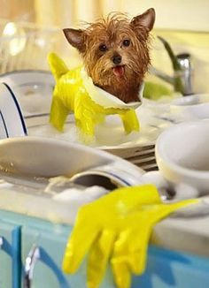 How my dog helps me with the dishes…