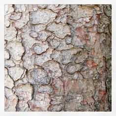 I can feel a pattern coming on #bark#trees #treebark#texture#silver#country#tattonpark #summer16 #naturephotography #letsmagpie#photographer #photography #