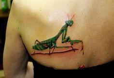 colourfull mantis.