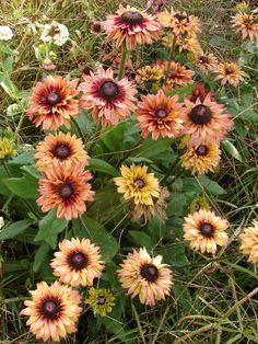 For getting sustainable growth of your garden plants you do require good soil quality, sunlight and sufficient water. Late Summer Flowers, Fall Flowers, Cut Flowers, Herbaceous Perennials, Herbaceous Border, Beautiful Gardens, Beautiful Flowers, Summer Plants, Sunflowers And Daisies