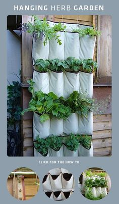 "This - and some other vertical gardening options - could be easily moved in and out as needed. ""hanging herb garden - I could do this in the RV!"""