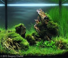 2013 AGA Aquascaping Contest - Entry #5 Tank Size 35 x 22 x 31 cm (14 x 8.7 x 12 in) Volume 23L (6 gallons)