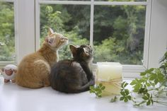 Windows are a big deal for cats; here are ways to make them safe as well as convenient.