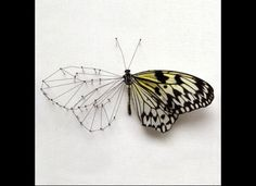 'Broken Butterflies': Anne Ten Donkelaar's Fragile, Modified Forms