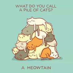 That is punny, meow!