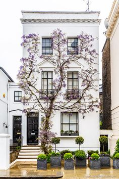 A stunning house in London's Kensington covered in wisteria vines. A stunning house in London's Kensington covered in wisteria vines. Kensington And Chelsea, Kensington London, Chelsea London, Kensington House, London Townhouse, London House, Apartments In London, London Apartment Interior, London Life